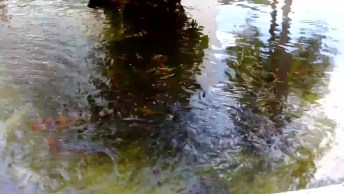 Peixes Lindos Em Um Poço, O Mundo É Cheio De Animais Espetaculares!