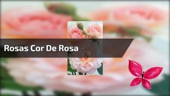 Rosas Cor De Roa, Uma Mais Linda Que A Outra, Impossível Escolher Apenas Uma!