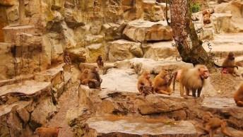 Santuários Dos Macacos, Um Cenário Da Natureza Que Parece De Filme!