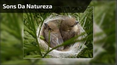 Sons Da Natureza Com Imagens Exuberantes!