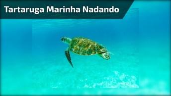 Tartaruga Marinha Nadando Lindamente, A Natureza É Linda Demais!