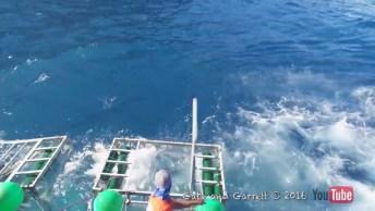 Tubarão Consegue Entrar Dentro De Jaula De Segurança De Mergulhador!