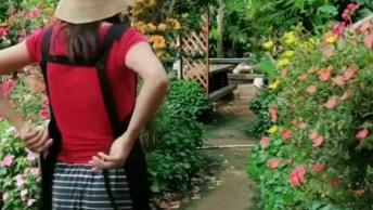 Veja O Que Esta Mulher Faz Em Seu Jardim, Simplesmente Maravilhoso!