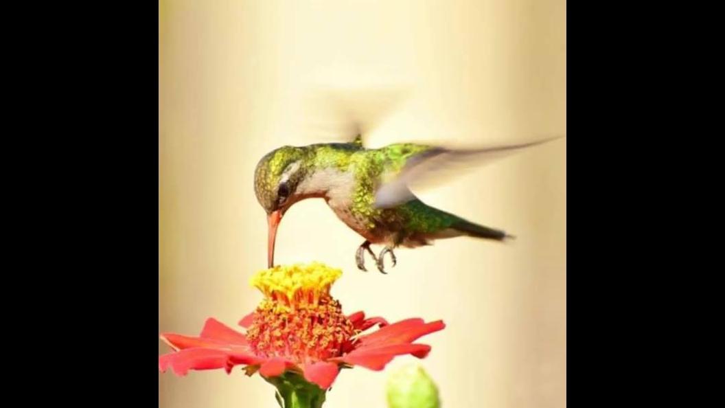 Veja só este vídeos de natureza com os mais belos pássaros