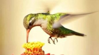Veja Só Este Vídeos De Natureza Com Os Mais Belos Pássaros!