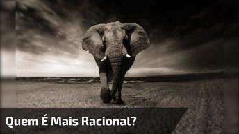 Vendo Esse Vídeo Eu Me Pergunto, Quem É Mais Racional, O Homem Ou Animal?