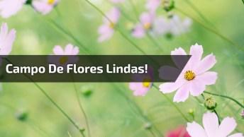 Vídeo Com As Mais Belas Flores De Nossa Lindíssima Natureza!