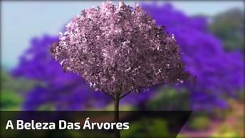 Vídeo Com Fotos De Arvores De Nosso País, É Uma Mais Linda Que A Outra!