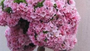 Vídeo Com Fotos De Bonsais Com Flores, Olha Só Que Coisa Mais Linda!