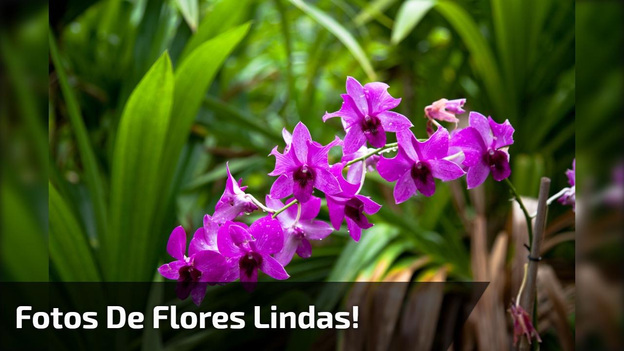Vídeo com fotos de flores, simplesmente maravilhosas, Deus é perfeito!!!
