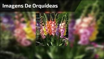 Vídeo Com Fotos De Lindas Flores, A Natureza É Mágica, Cheia De Encantos!