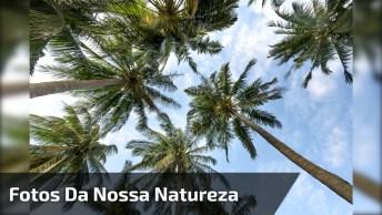 Vídeo Com Fotos De Nossa Maravilhosa Natureza, Vale A Pena Conferir!