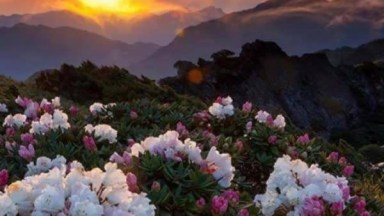 Vídeo Com Fotos De Nossas Belíssimas Flores, A Natureza É Maravilhosa!