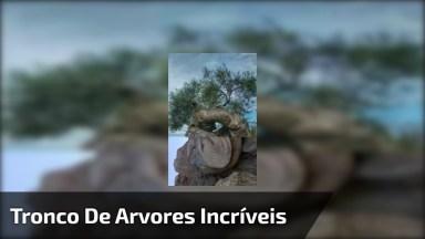 Vídeo Com Fotos De Troncos De Arvores Simplesmente Fantásticas!