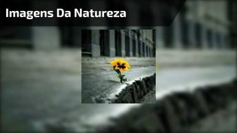 Vídeo Com Imagens Da Natureza Sobrevivendo Nos Lugares Mais Difíceis!