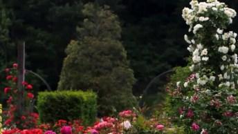 Vídeo Com Imagens De Flores Com Lindo Som De Passarinhos, Vale A Pena Apreciar!