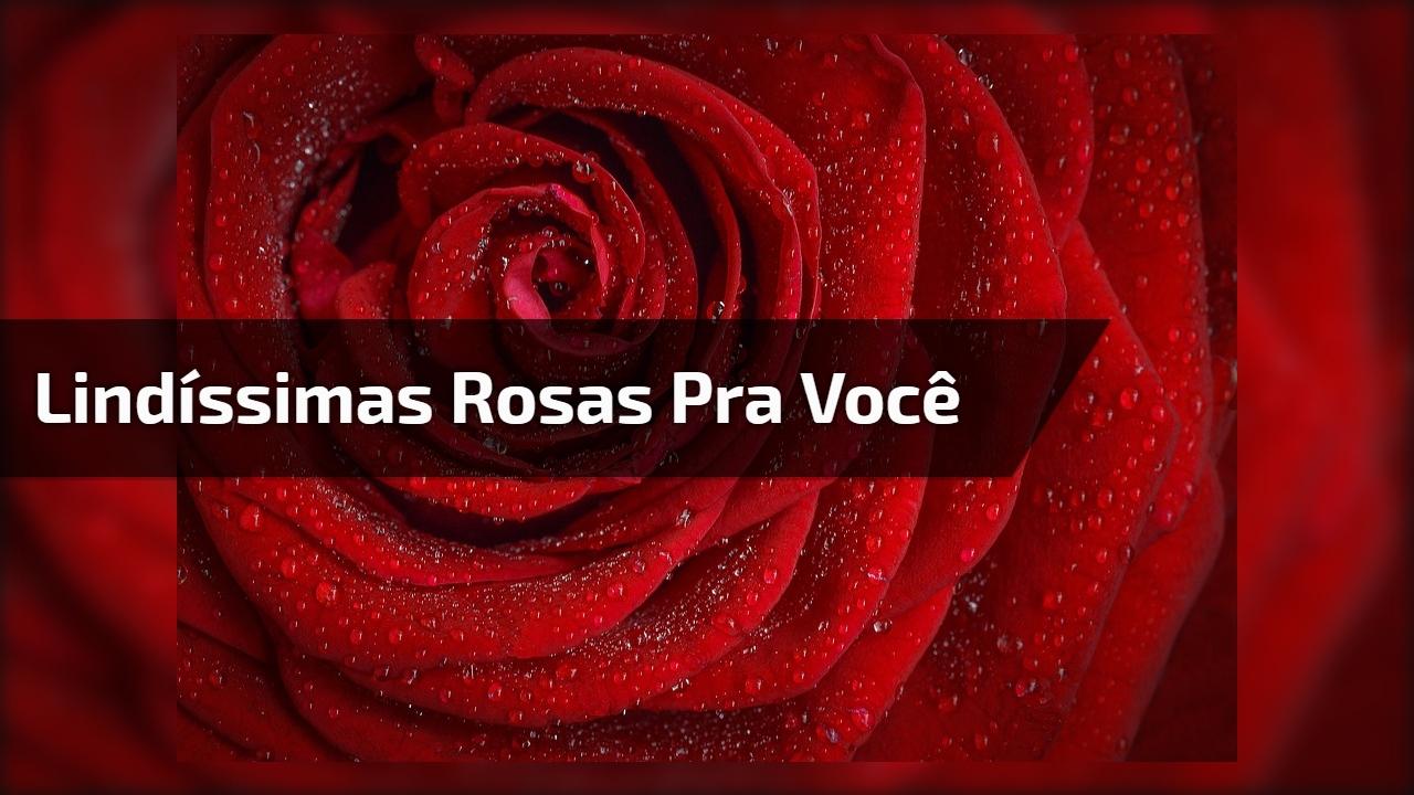Vídeo com imagens de lindíssimas rosas, vale a pena apreciar!!!