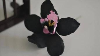 Vídeo Com Linda Orquídea Negra! Você Já Viu Alguma Flor Negra?
