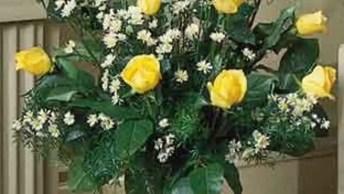Vídeo Com Lindas Flores Amarelas, Nossa Maravilhosa Natureza E Suas Diversidades