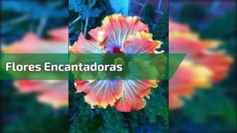 Vídeo Com Lindas Flores De Nossa Encantadora Natureza! Vale A Pena Conferir!