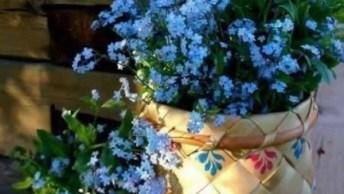 Vídeo Com Lindas Fotos De Arranjos De Flores, É Um Mais Belo Que O Outro!