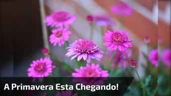 Vídeo Com Lindas Fotos De Flores! A Primavera Esta Chegando!