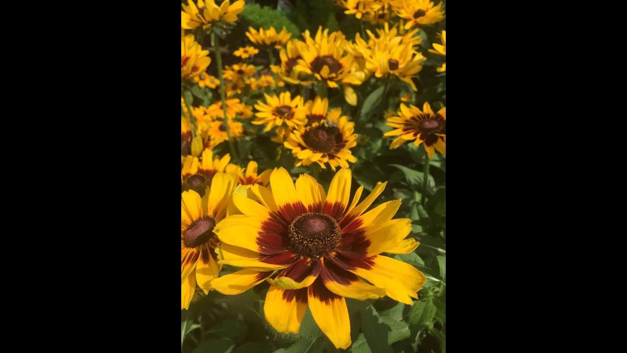Vídeo com lindas fotos de flores amarelas