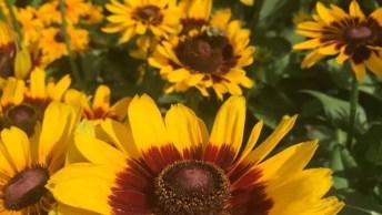 Vídeo Com Lindas Fotos De Flores Amarelas, Elas Que Perfumam A Natureza!
