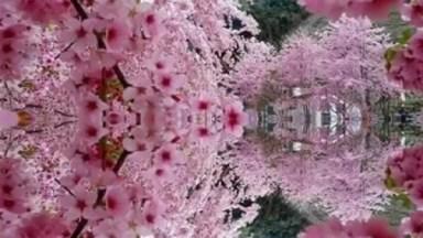 Vídeo Com Lindas Fotos De Flores De Nossa Magnifica Natureza, Aprecie!