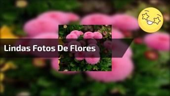 Vídeo Com Lindas Fotos De Flores, Elas Que Dão Cores A Natureza!