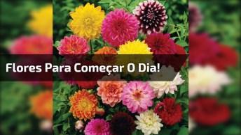Vídeo Com Lindas Fotos De Flores Para Você Começar Bem O Dia!