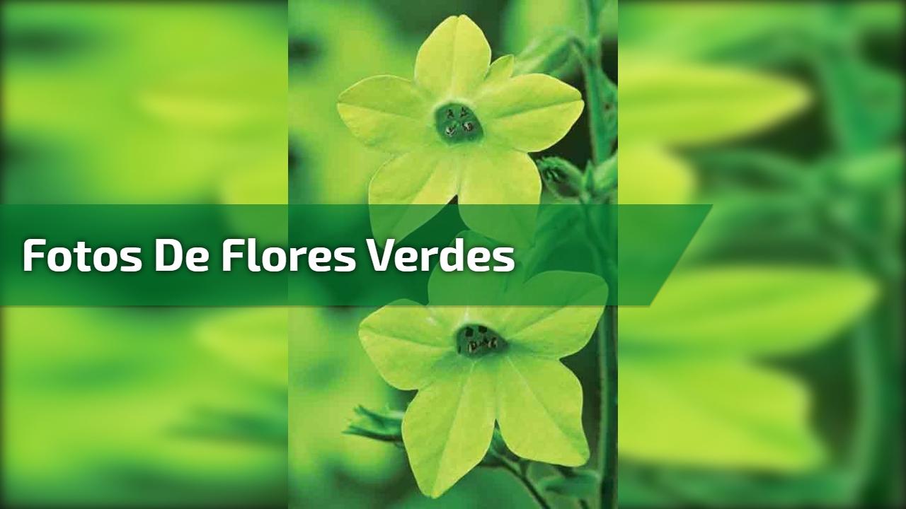 Vídeo com lindas fotos de flores verdes. Isso mesmo flores verdes existem!!!