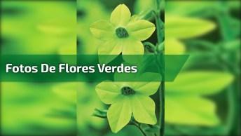Vídeo Com Lindas Fotos De Flores Verdes. Isso Mesmo Flores Verdes Existem!