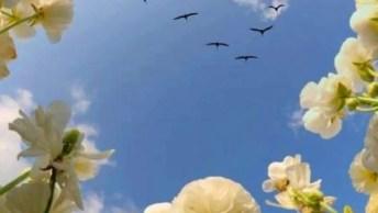 Vídeo Com Lindas Fotos De Nossa Exuberante Natureza! Vale A Pena Conferir!