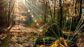 Vídeo Com Lindas Fotos De Nossa Fantástica Natureza, Vale A Pena Conferir!