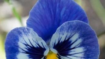 Vídeo Com Lindas Imagens De Flores Azuis, A Natureza É Fantástica!