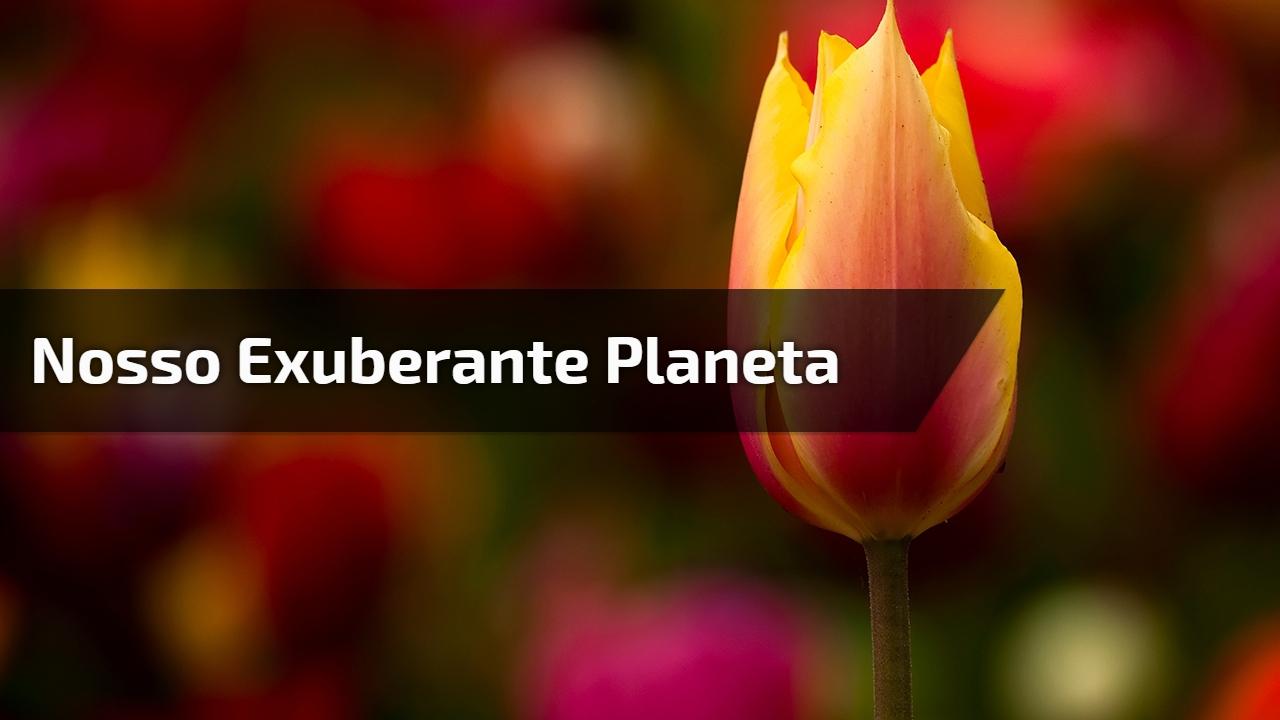 Nosso exuberante planeta