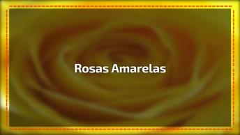 Vídeo Com Lindas Rosas Amarelas, Uma Das Flores Mais Populares Do Mundo!
