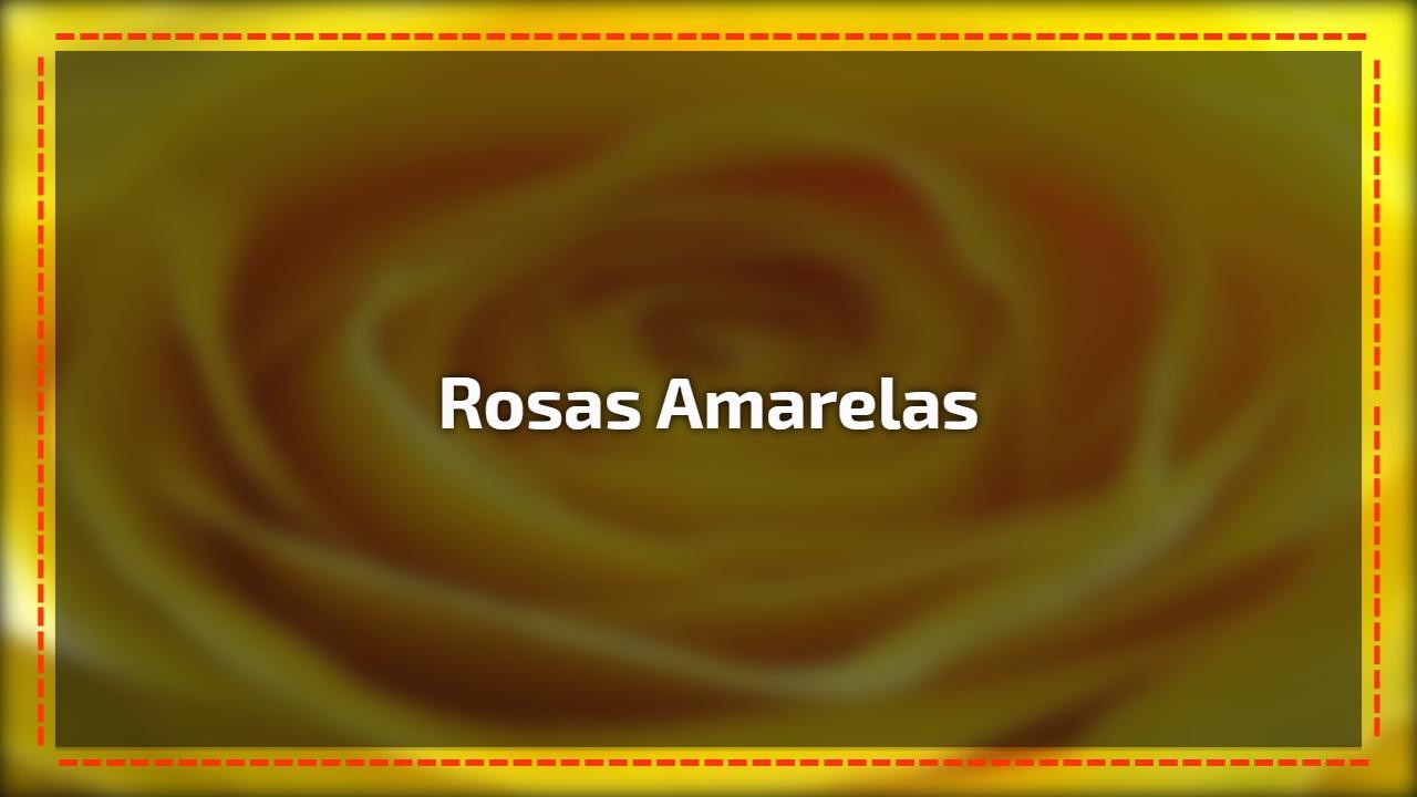 Vídeo com lindas rosas amarelas, uma das flores mais populares do mundo!!!