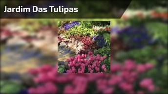 Vídeo Com Lindíssimo Jardim Keukenhof, Jardim Das Tulipas Na Holanda!
