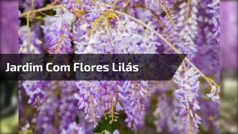 Vídeo Com Lindo Jardim Com Árvores Com Flores Lilás Maravilhosa!