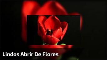 Vídeo Com Lindos Abrir De Flores. O Espetáculo Da Vida Em Câmera Lenta!