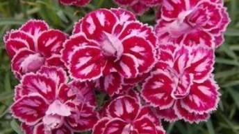 Vídeo Com Maravilhosas Fotos De Flores De Todos Os Tipos, Cores E Espécie!