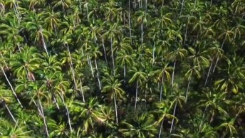 Vídeo Com Um Pouquinho De Kauai, Um Lugar Cheio De Paisagens Naturais!