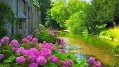 Vídeo Como Lindas Fotos De Hortênsias, Como Estas Flores São Lindas!