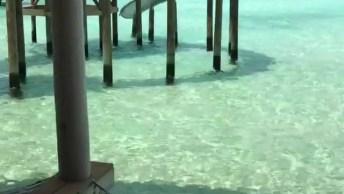 Vídeo Mostrando Como São Os Chalés Nas Ilhas Maldivas, Um Lugar Lindíssimo!