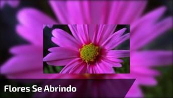 Vídeo Mostrando Flores Se Abrindo, Simplesmente Fantástico!