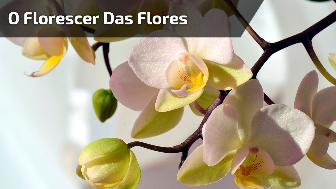 Vídeo mostrando florescer das flores de nossa maravilhosa natureza!!!
