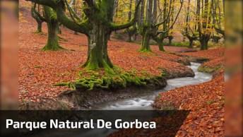 Vídeo Mostrando Lindo Córrego Com Folhas Secas Ao Chão, E Arvores!