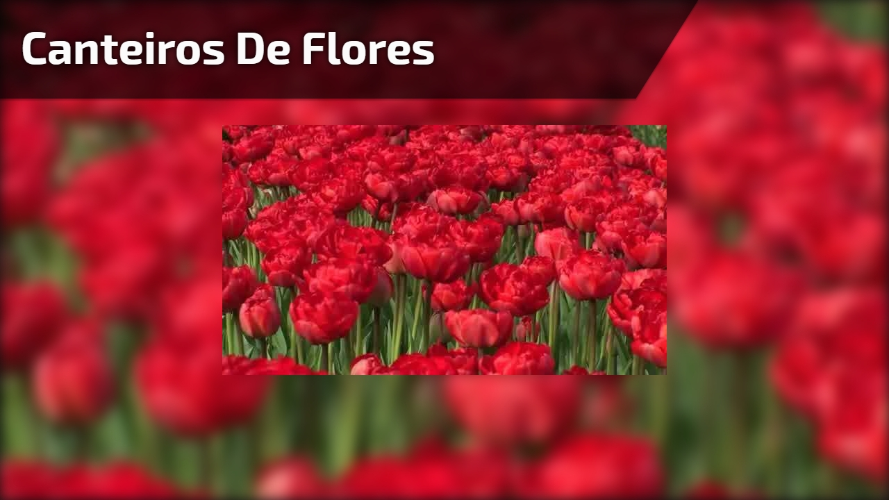 Canteiros de flores